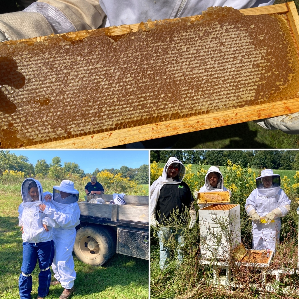OVCTC Ag Business honey production